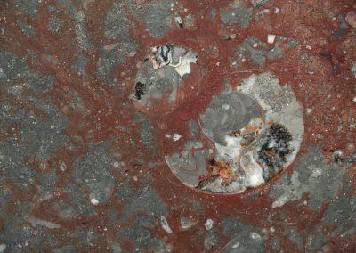237 ZEM marmi immagine di Fossil RED NAT DSC01158